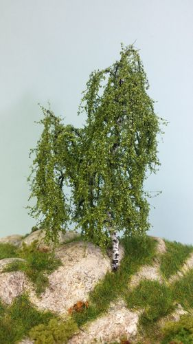 birch tree cm 16