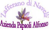 logo_papaoli.jpg