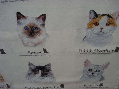ELISABETH'S STUDIO -CAT BREEDS